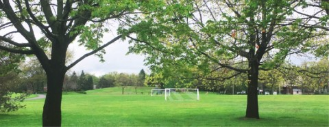 Terrain de soccer et arbres
